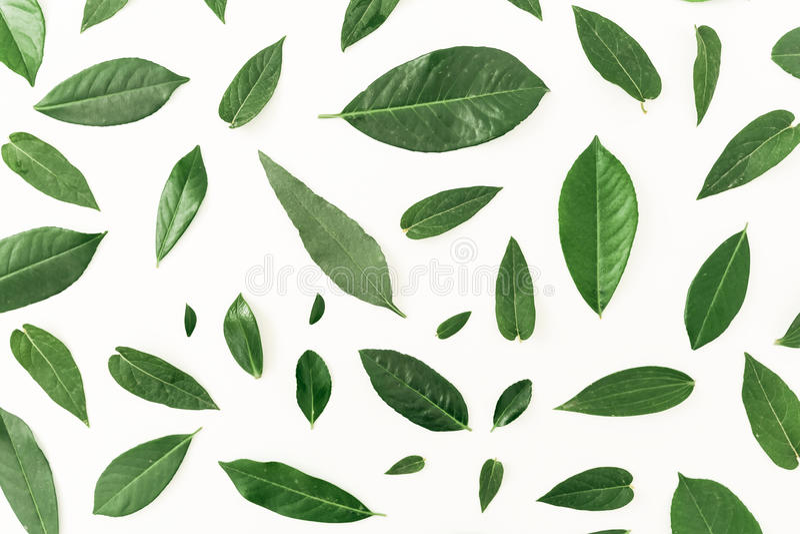 Цветочный узор сделанный зеленого цвета выходит на белую предпосылку Плоское положение Взгляд сверху стоковая фотография rf