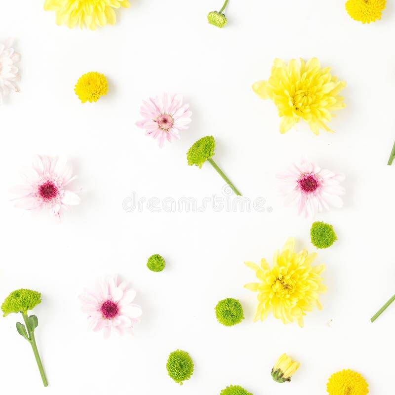 Цветочный узор сделанный хризантем на белой предпосылке плоско стоковое фото rf