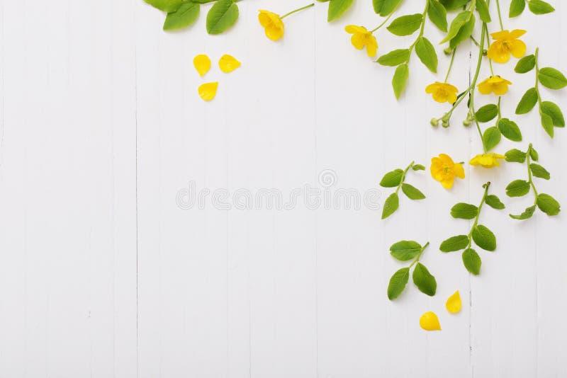 Цветочный узор с желтыми лютиками на белой предпосылке стоковое фото