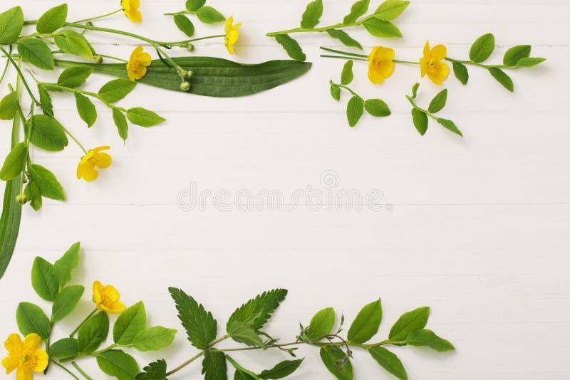 Цветочный узор с желтыми лютиками на белой предпосылке стоковые фотографии rf