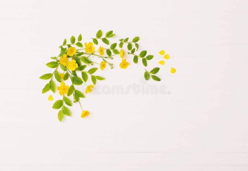 Цветочный узор с желтыми лютиками на белой предпосылке стоковое изображение