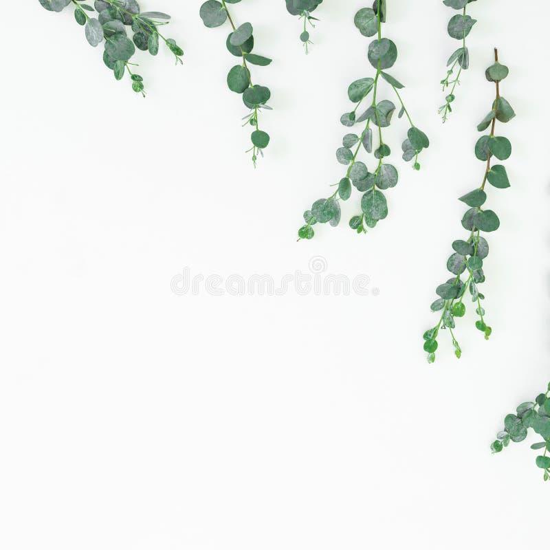 Цветочный узор с изолированными листьями эвкалипта на белой предпосылке Плоское положение, взгляд сверху стоковые изображения rf