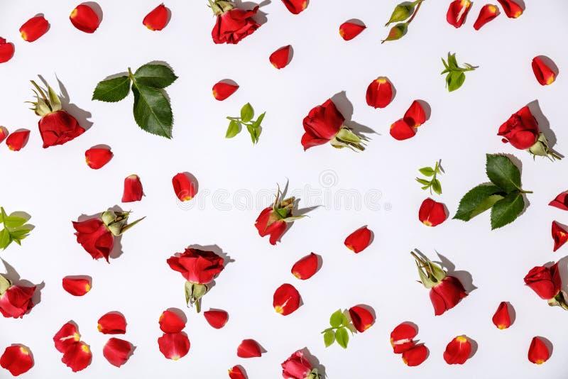 Цветочный узор с красными розами, лепестками и листьями на белой предпосылке стоковая фотография