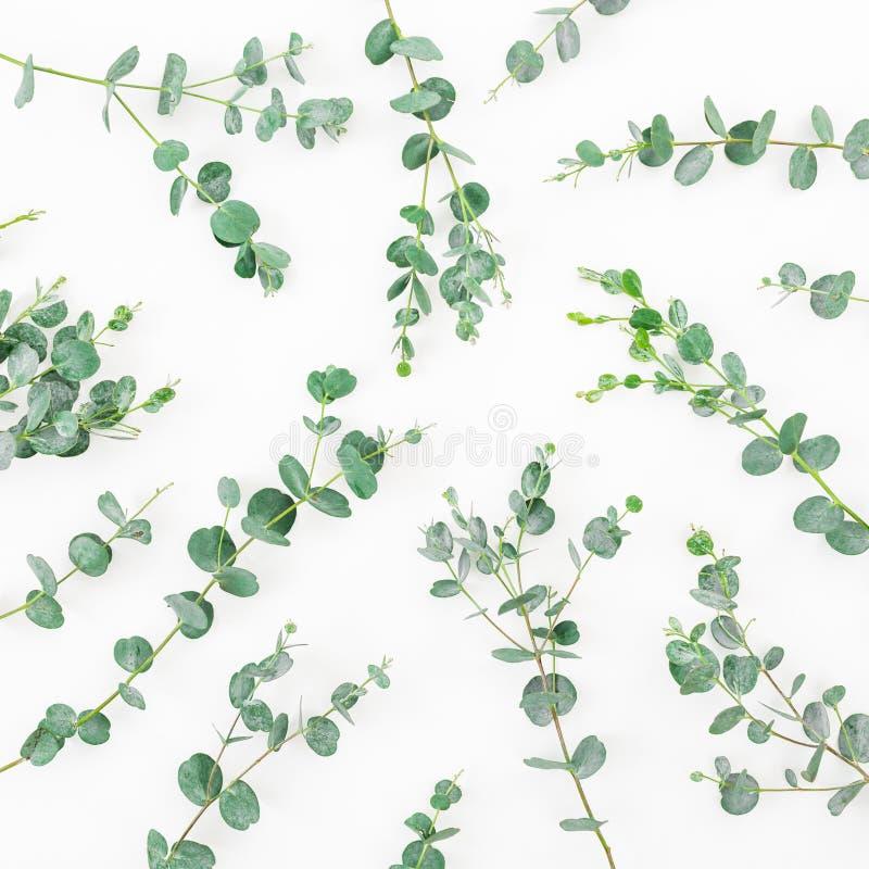 Цветочный узор с листьями эвкалипта на белой предпосылке Плоское положение, взгляд сверху стоковые фотографии rf
