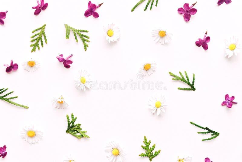 Цветочный узор с маргариткой и фиолетовыми цветками сирени стоковые изображения rf