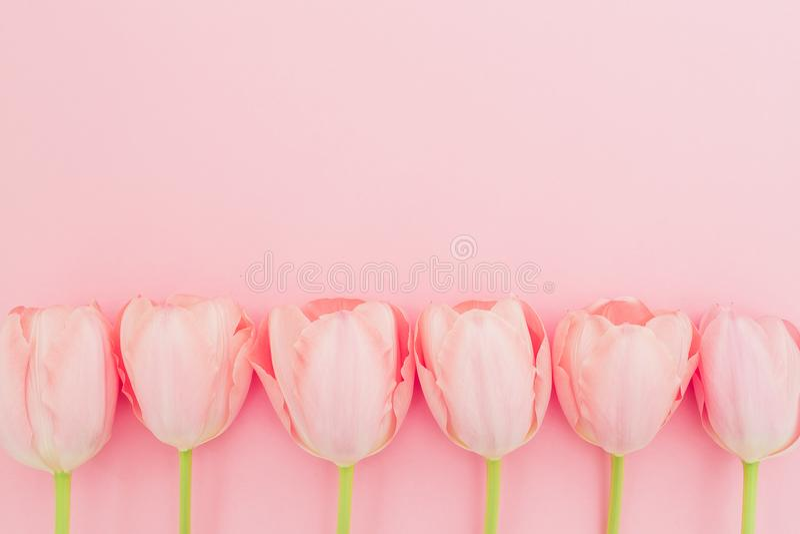 Цветочный узор с тюльпанами цветет на розовой пастельной предпосылке Плоское положение, взгляд сверху Предпосылка времени весны стоковое изображение rf
