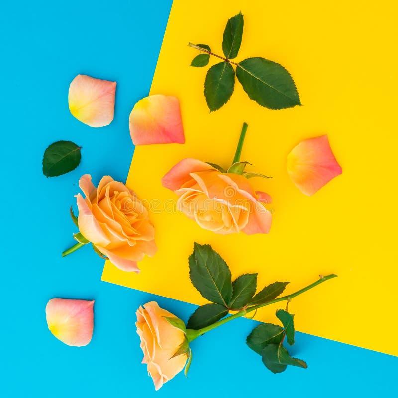 Цветочный узор с цветками и листьями роз на желтой и голубой предпосылке r стоковое изображение rf