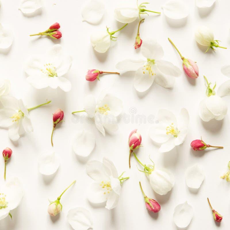 Цветочный узор с цветками пинка и белых на белой предпосылке o стоковое изображение