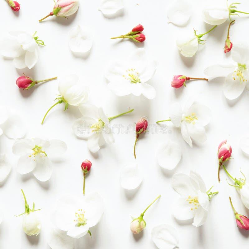 Цветочный узор с цветками пинка и белых на белой предпосылке o стоковые изображения rf