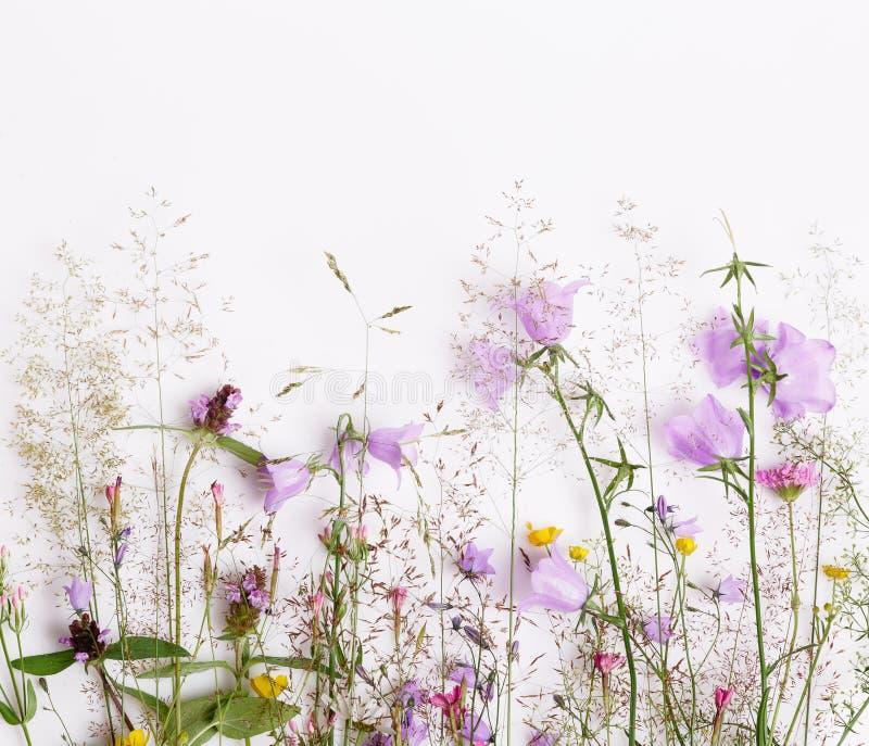 Цветочный узор с wildflowers, зелеными листьями, ветвями на белой предпосылке o стоковое изображение