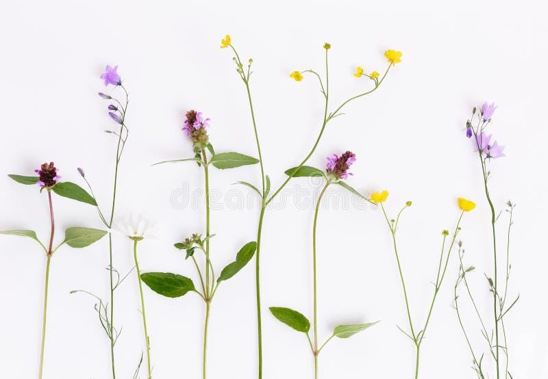 Цветочный узор с wildflowers, зелеными листьями, ветвями на белой предпосылке o стоковое фото rf