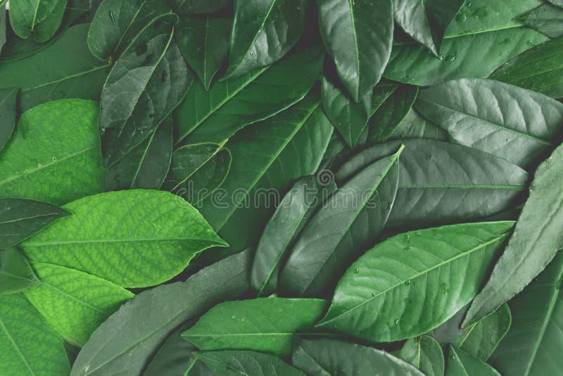 Цветочный узор тропических листьев Творческий план листьев на белой предпосылке Плоское положение Взгляд сверху стоковое фото rf