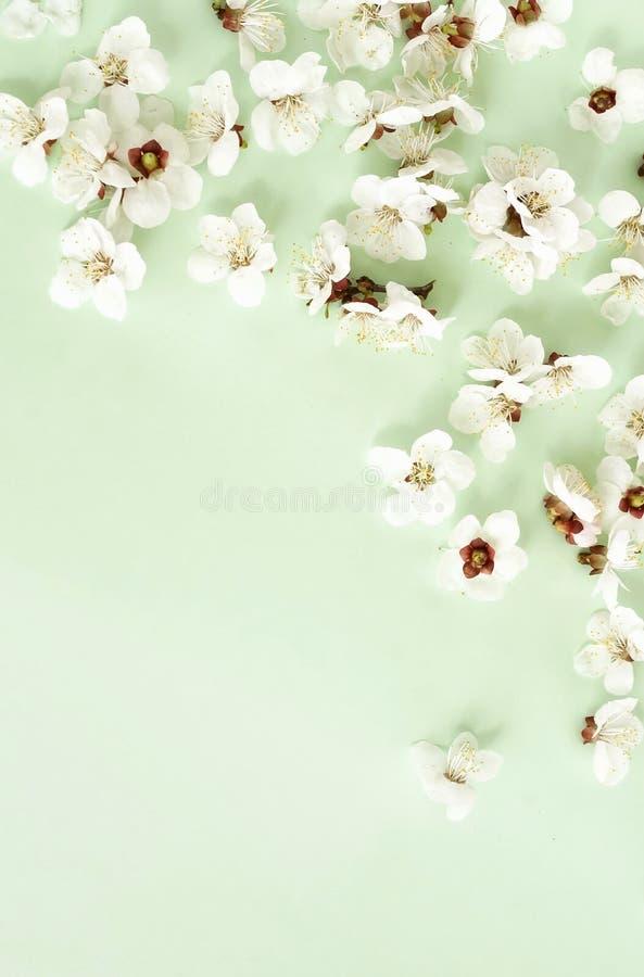Цветочный узор цветков весны на бледной предпосылке мяты стоковая фотография