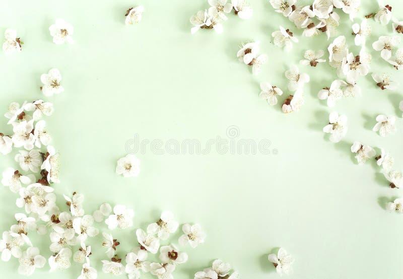 Цветочный узор цветков весны на бледной предпосылке мяты стоковое изображение
