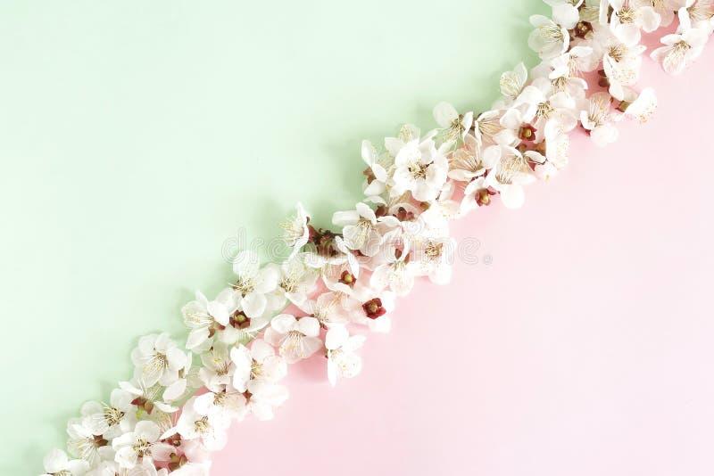 Цветочный узор цветков весны на бледном - розовая предпосылка мяты стоковые изображения