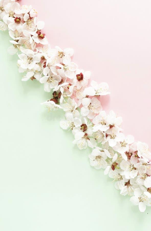 Цветочный узор цветков весны на бледном - розовая предпосылка мяты стоковая фотография