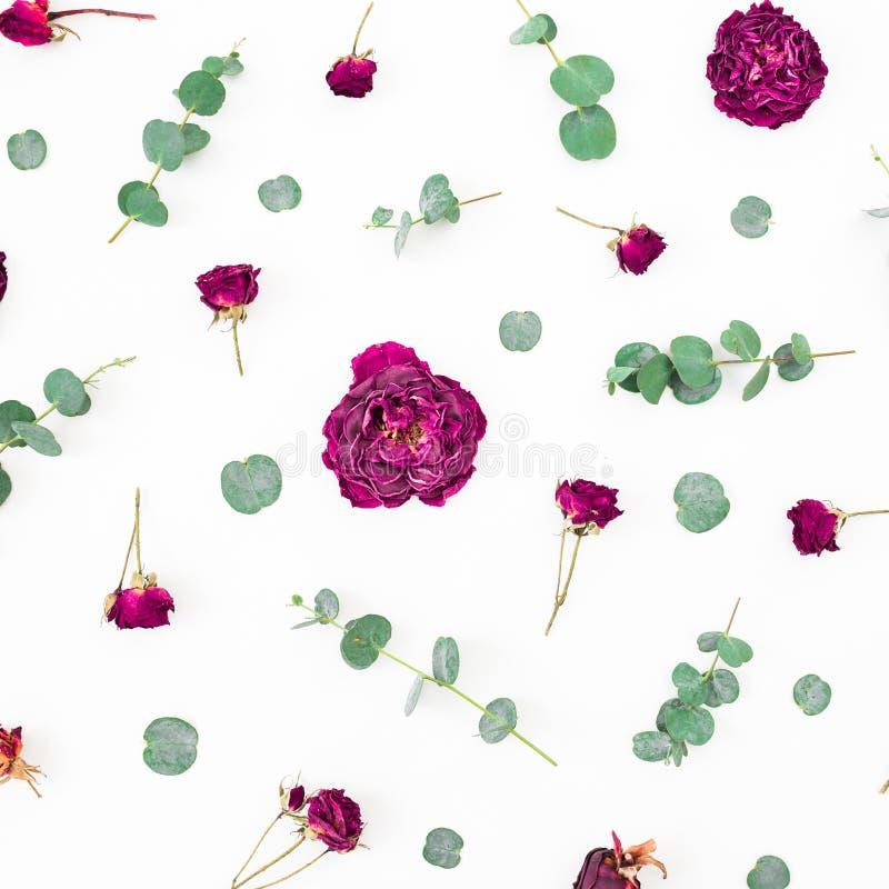 Цветочный узор цветков и ветвей эвкалипта на белой предпосылке r стоковые фотографии rf