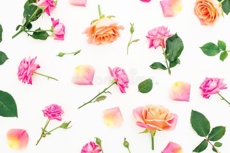 Цветочный узор цветков роз на белой предпосылке r стоковые изображения rf