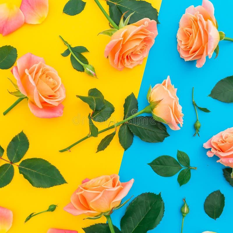 Цветочный узор цветков роз с изолированными листьями на желтой и голубой предпосылке Плоское положение, взгляд сверху стоковая фотография