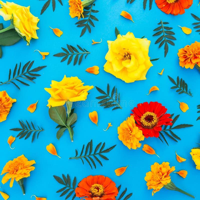 Цветочный узор ярких желтых и красных цветков с лепестками на голубой предпосылке Плоское положение, взгляд сверху стоковая фотография rf