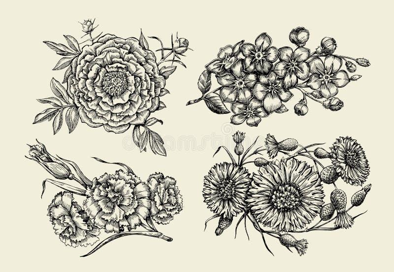 Цветы Вручите вычерченный цветок эскиза, пион, cornflower, knapweed, незабудку, гвоздику, гвоздичное дерево также вектор иллюстра иллюстрация штока