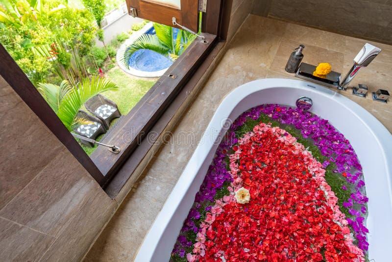 Цветы в ванной рядом с окном стоковые фотографии rf