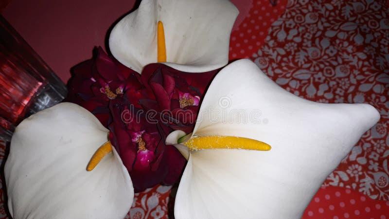 Цветы за столом стоковое фото rf