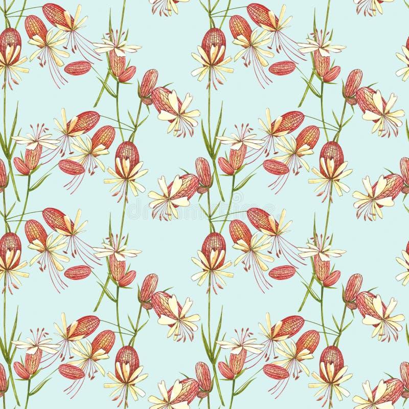 Цветы кемпиона Bladder Набор водоплавающих цветов, цветочных элементов, нарисованных вручную ботанических иллюстраций стоковые фото