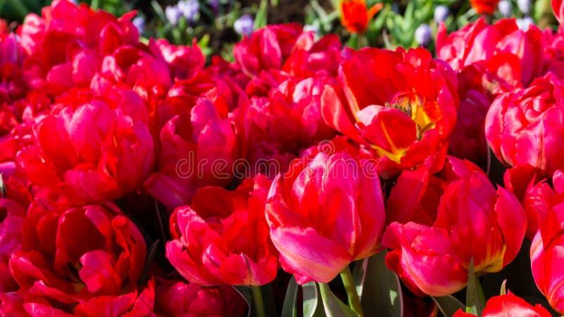 Цветы на фоне обоев парка dutch стоковое фото rf