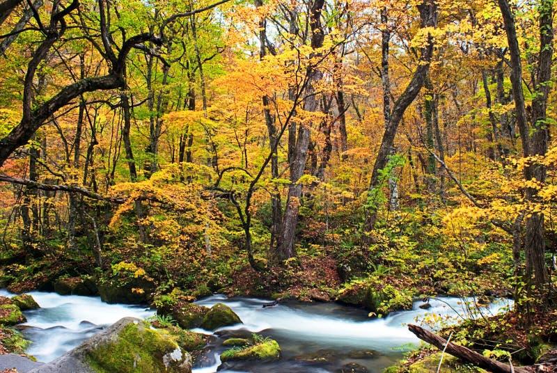 Цвета осени потока Oirase стоковые фотографии rf