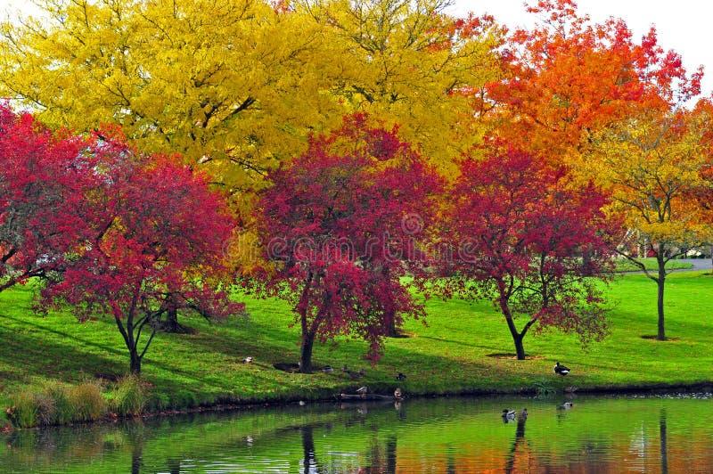 цветы осени стоковые фотографии rf
