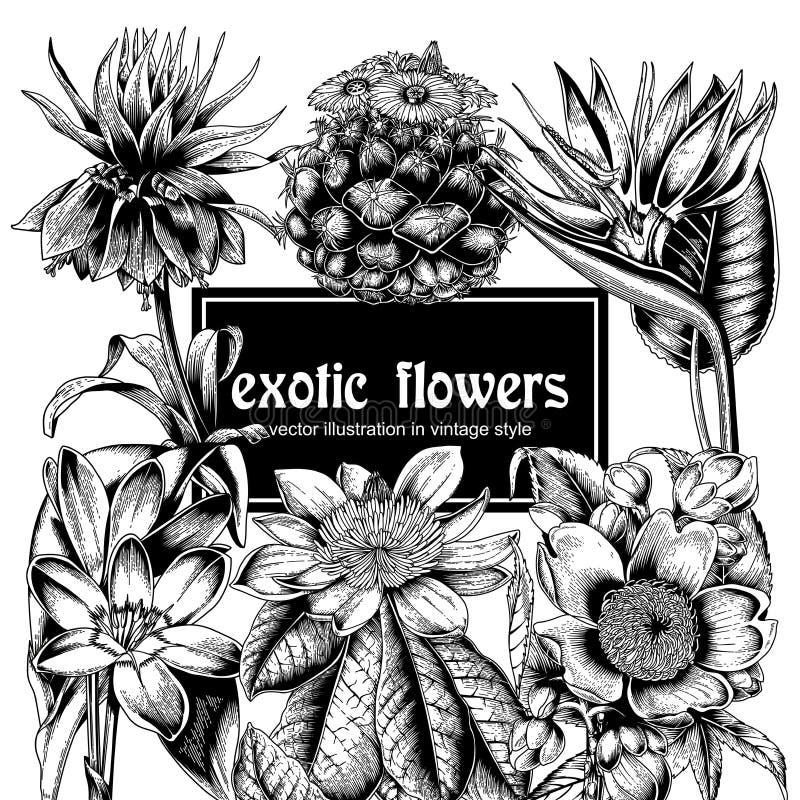 Цветы Открытка года сбора винограда вектора тропическо Vegetable картина Ботаническая тема иллюстрация штока