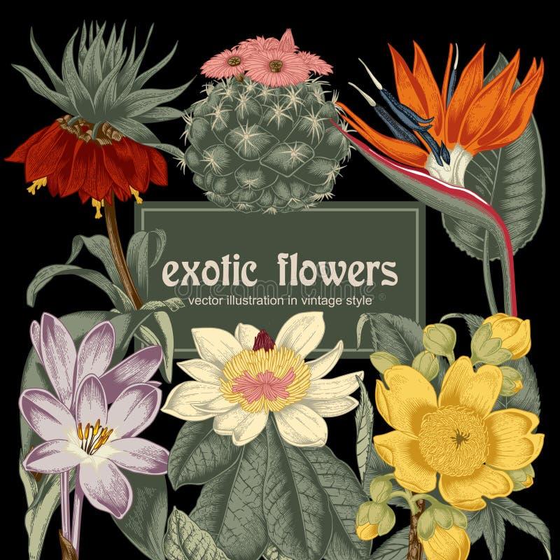 Цветы Открытка года сбора винограда вектора тропическо Vegetable картина Ботаническая тема бесплатная иллюстрация