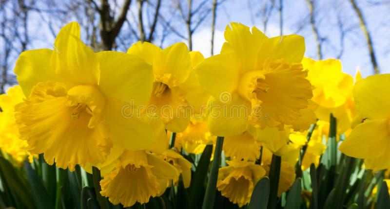 Цветы тюльпаны в парке обоев фон открытка стоковые фото