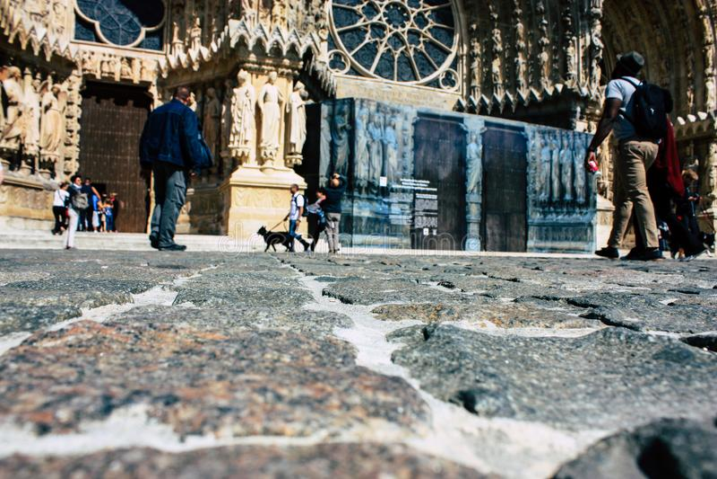 Цветы Франции стоковые фотографии rf