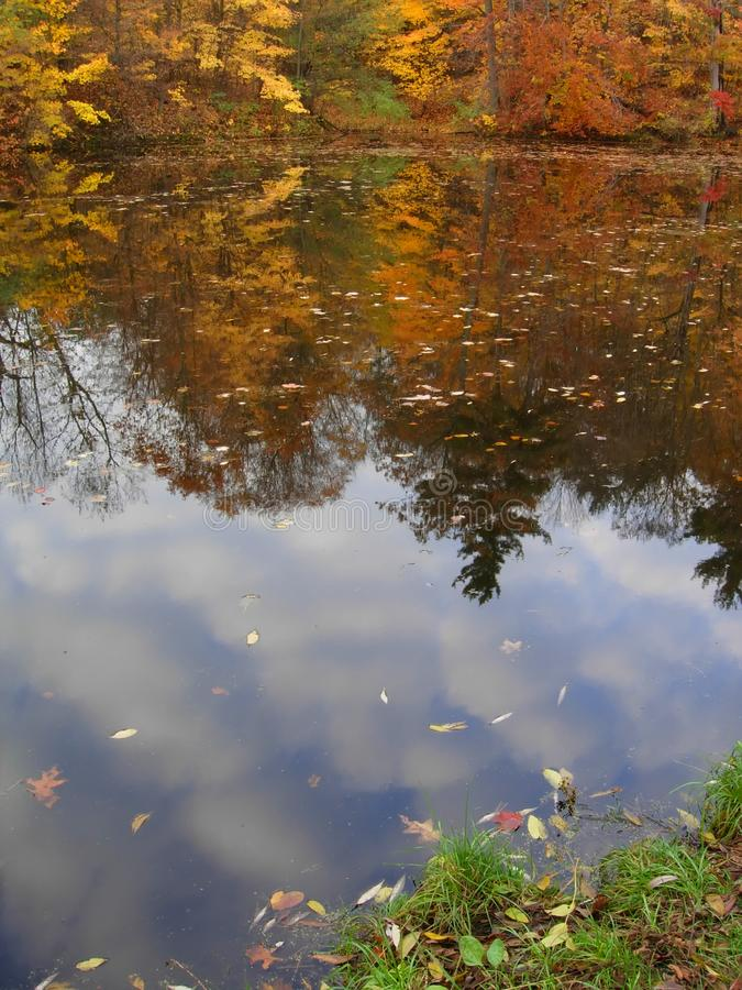 Цветы 2 падения стоковое фото