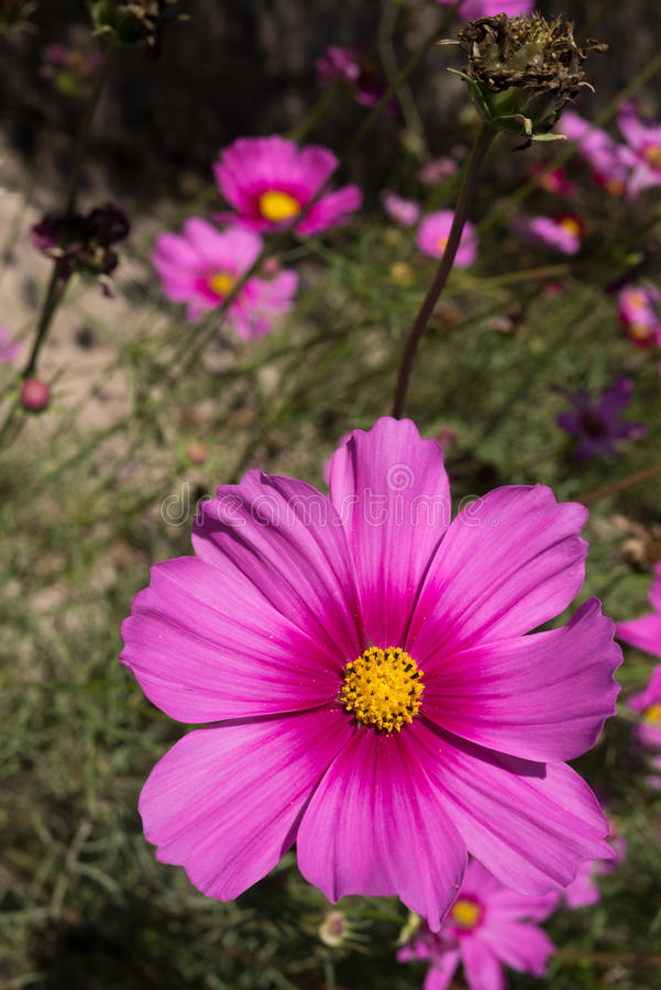 Download Цветы стоковое фото. изображение насчитывающей весна - 37931804