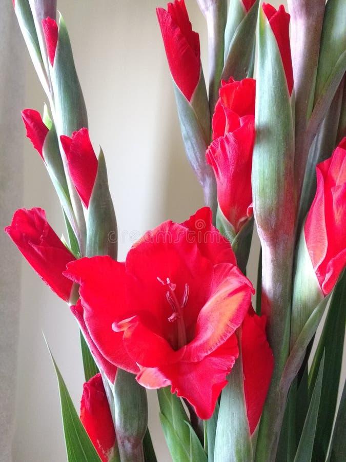 Цветы стоковое изображение