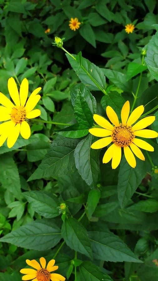 Цветы royalty free stock image