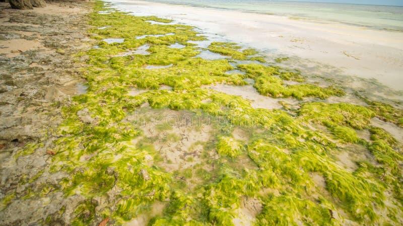 Цветя водоросли на побережье острова Bohol philippines Время вечера Стрельба в движении стоковая фотография rf