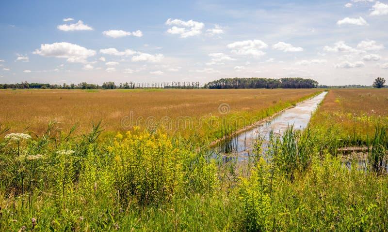 Цветя дикие растения и тростники на краю длинного рва в a стоковые изображения rf