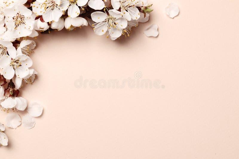 цветя персиковое дерево на розовой предпосылке стоковые изображения rf