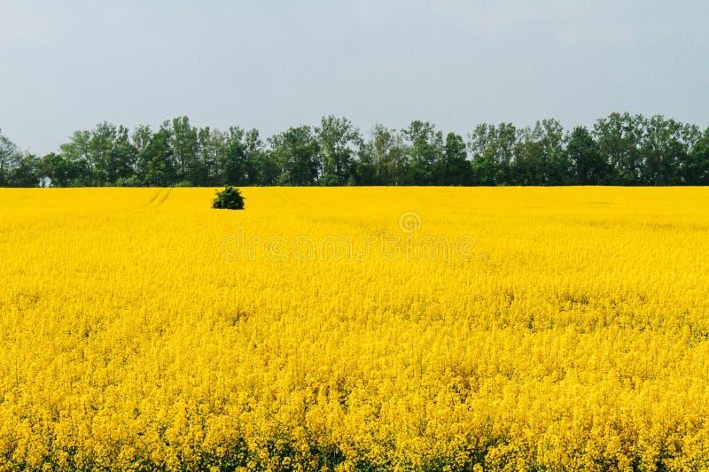 Цветя поле с деревьями летом стоковые фото