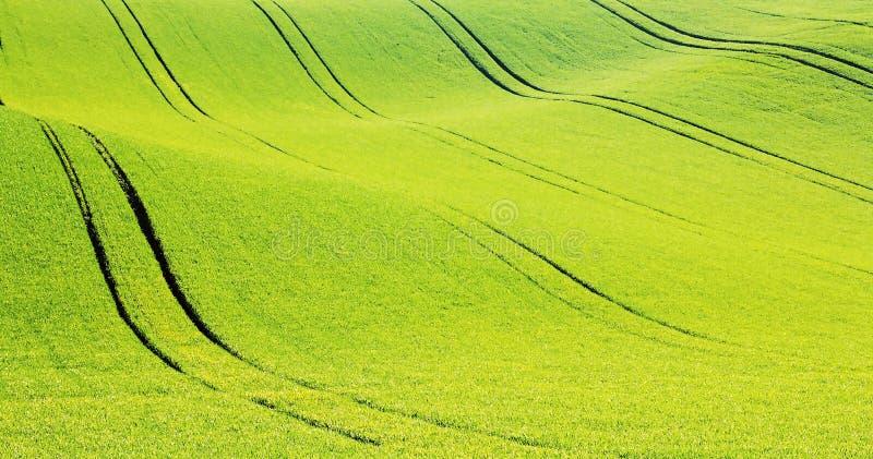 Цветя поле весны стоковые фото