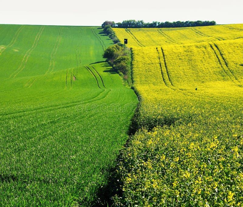 Цветя поле весны стоковое фото rf
