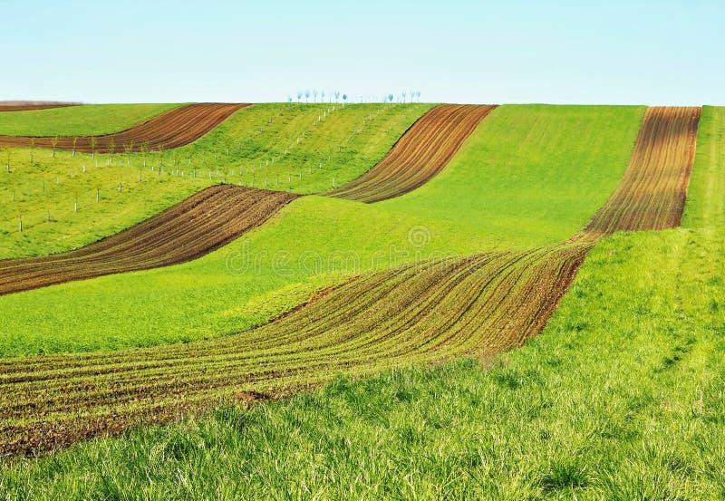 Цветя поле весны стоковая фотография rf