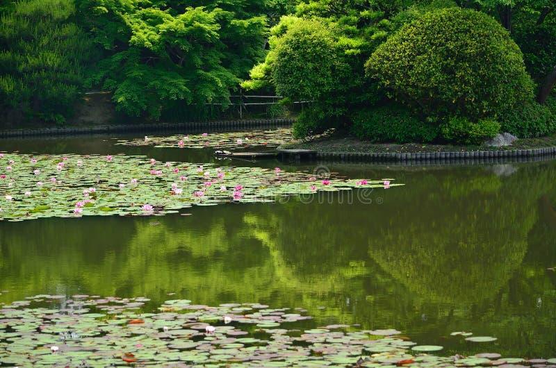 Цветя пруд японского сада, Киото Японии стоковые фотографии rf