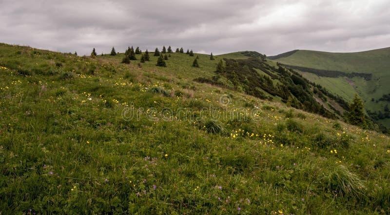 Цветя луг весны в горах Velka Fatra стоковые изображения
