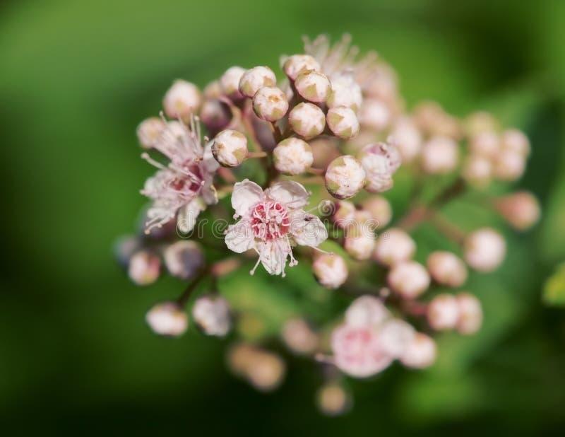 цветя shrub стоковые фотографии rf