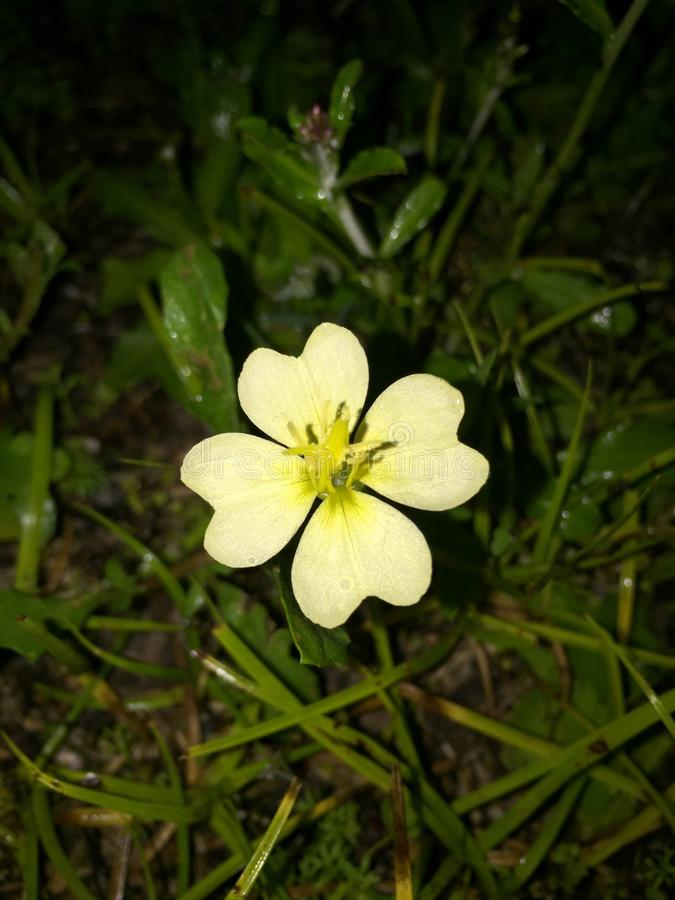 Цвет весны стоковая фотография